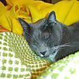 JJ Resting On Fabric