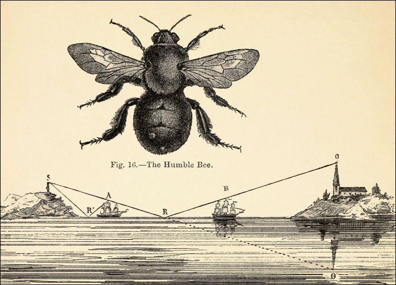 The humble bee FL