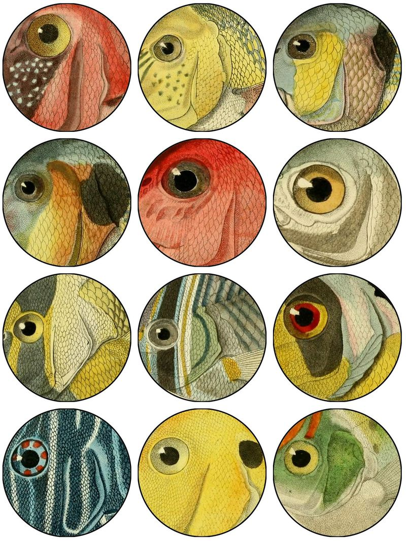 Fish eyes collageFL