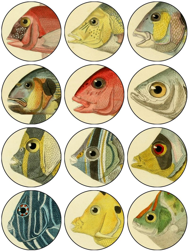 Fish faces collageFL