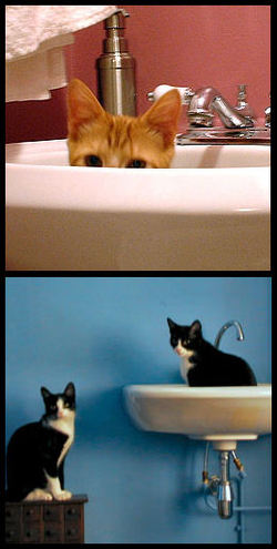 Cats_in_sink_2