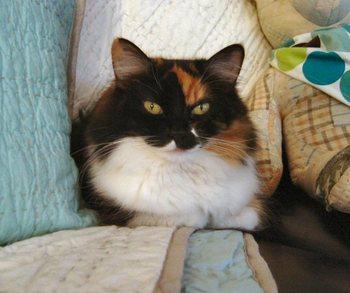 Mabel_sitting_pretty