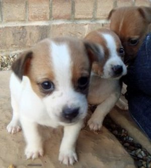 Place_to_bark_puppies_2