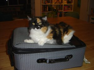 Mabel_and_suitcase_1