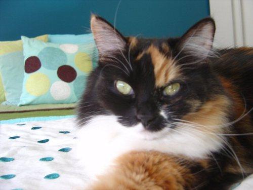 Mabel on bed 2006